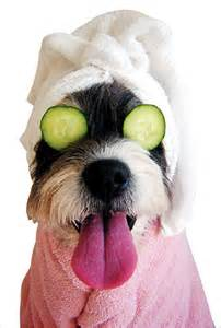 Happy Tails Dog Grooming