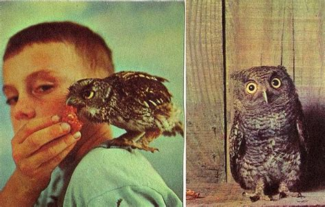 are owls pets pet owl all about owl