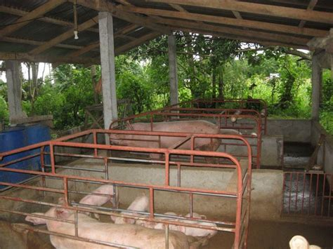 piggery google search outdoor structures outdoor search