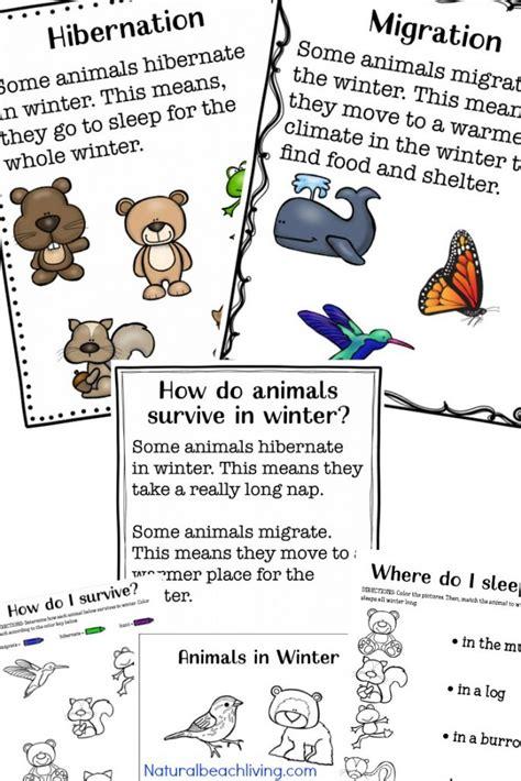 35 winter preschool themes and lesson plans 584 | winter animals for preschool pin 1 683x1024