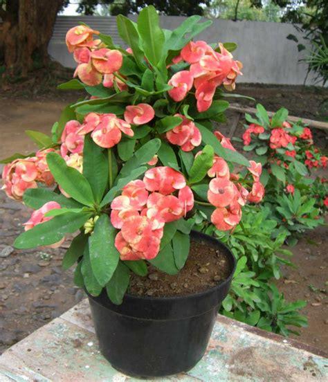 menanam merawat tanaman hias pot tanaman