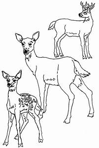 mom and baby coloring pages - print download deer coloring pages for totally