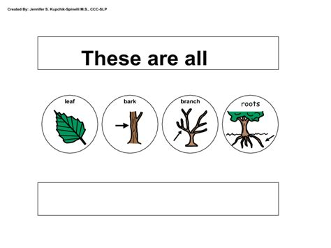 parts   tree worksheet worksheet  kindergarten