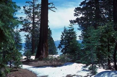 Provides information on ed z'berg sugar pine point state park, tahoma, california including gps coordinates, local directions, contact details, rv location address: Camping at SUGAR PINE POINT SP, CA
