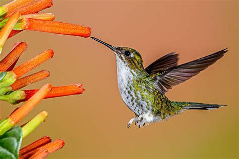 feeding hummingbirds  foods  offer