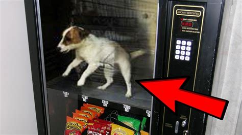 craziest vending machines you simply to see