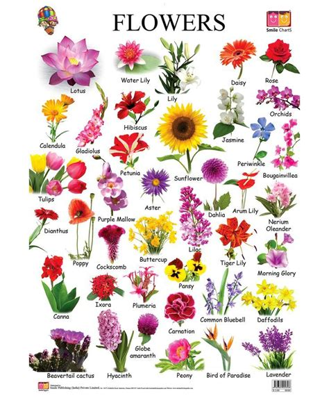 Image Result For Different Types Of Flowers With Names