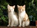cat animal | My HD Animals