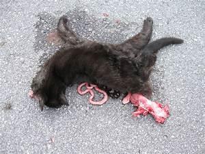 oh no! dead cat! -_- | Flickr - Photo Sharing!