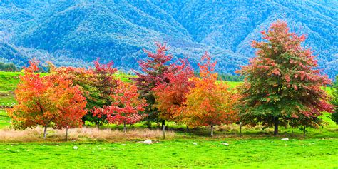 panoramic photo  red autumn tress   canterbury