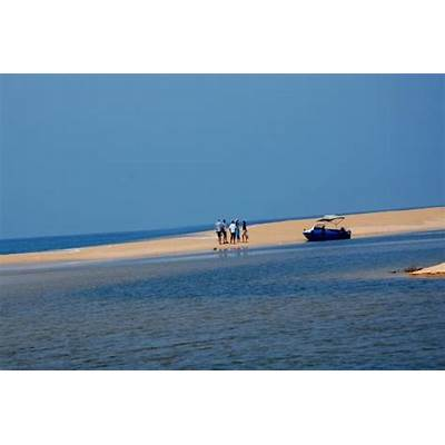 Birdlife - Picture of Poovar Backwater Cruise