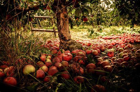 Hd Fall Pumpkin Wallpaper Apple Orchard Autumn Photo 35580383 Fanpop