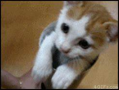 Scared Kittens GIF - Find & Share on GIPHY