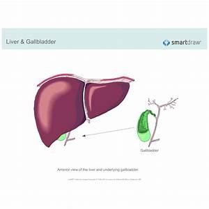 Liver  U0026 Gallbladder