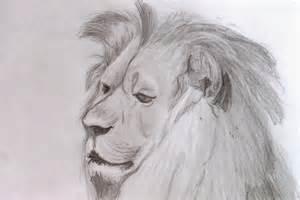 Animal Art Drawings