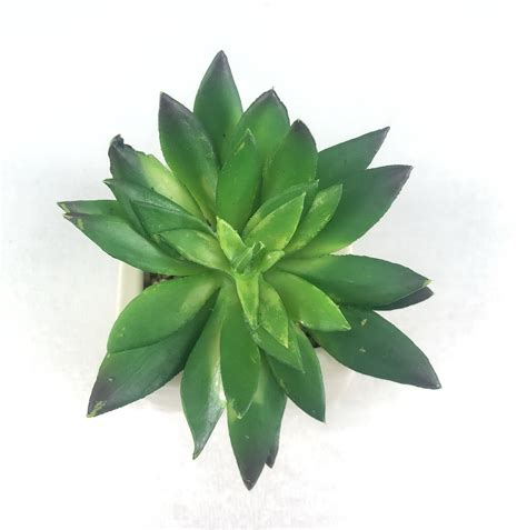 Succulent head(เฉพาะหัวไม่รวมกระถาง) ไม้อวบน้ำปลอม สำหรับ ...
