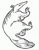 Anteater sketch template