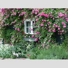 Cottage Gardens  The Charming Beauty Of English Country