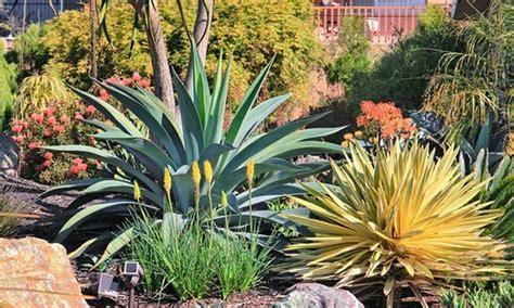 yucca plante interieur ou exterieur plantes d ext 233 rieur yucca gloriosa groupon