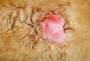 slideshow skin problems in dogs