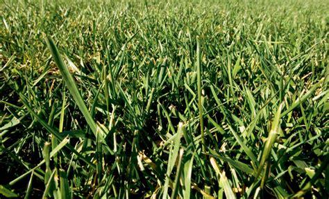 home turf  oregon grass seed farm flavor