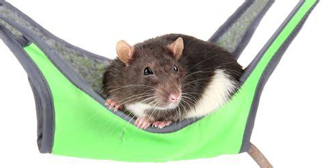 Pet Rat Hammocks rat hammocks