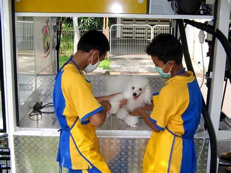 pet grooming services  jakarta whats  jakarta