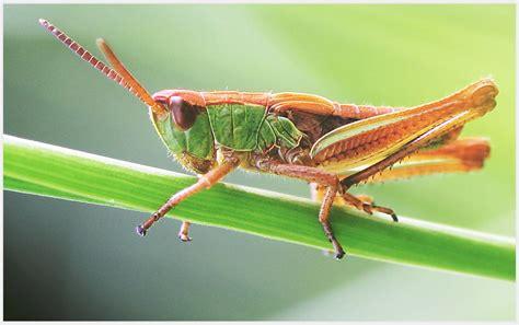 wasserbett nicht zu empfehlen langbein nicht zu empfehlen foto bild tiere wildlife insekten bilder auf fotocommunity