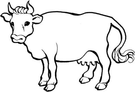 sketsa gambar sapi  belajar mewarnai anak tk
