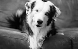 Schwarz Weiß Bilder Tiere : tiere hunde schwarz wei augen pov hintergrundbilder ~ Markanthonyermac.com Haus und Dekorationen