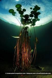 Winning Photography | UnderwaterCompetition.com