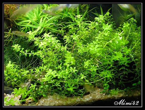r 233 sultats de recherche plante avant plan aquarium 183 crevettes aquarium 42