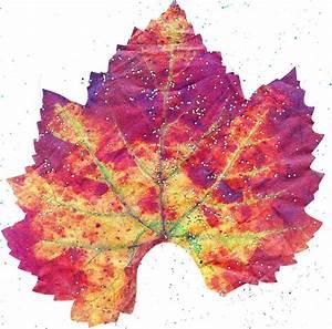 Single Autumn Leaf by Anne-Elizabeth Whiteway