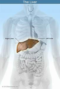 Liver  Liver Disease  Anatomy  And Function  Causes