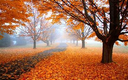 Fall Nature Landscape Orange Trees Road Leaves