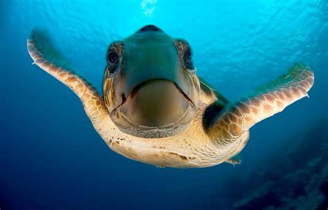ocean animal encyclopedia oceana