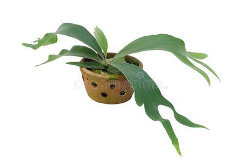 parassiti limone in vaso parassiti dei limoni in vaso free pianta di limoni with