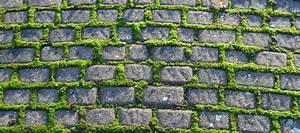 Unkraut Zwischen Pflastersteinen : unkraut zwischen pflastersteinen entfernen yli tuhat ~ Michelbontemps.com Haus und Dekorationen