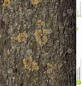 Achat Tronc Arbre Decoratif : texture de tronc d 39 arbre photo stock image 41043728 ~ Zukunftsfamilie.com Idées de Décoration