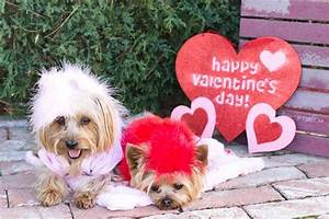 14 Dogs Show You How To Get Valentine's Day Right - World ...