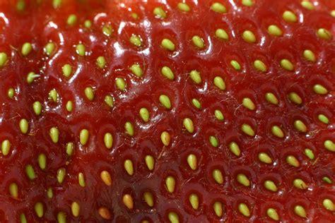 strawberry seeds planting strawberry seeds