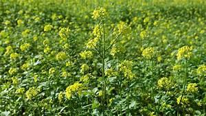 Kokoserde Für Welche Pflanzen : welche pflanzen eignen sich f r eine gr nd ngung nachhaltigkeit artikel ~ Orissabook.com Haus und Dekorationen