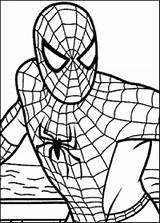Spiderman Coloring Spiders Clipartmag sketch template