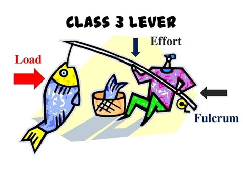 Is A Fishing Rod A 1 Class Lever Or 3 Class Lever What Is