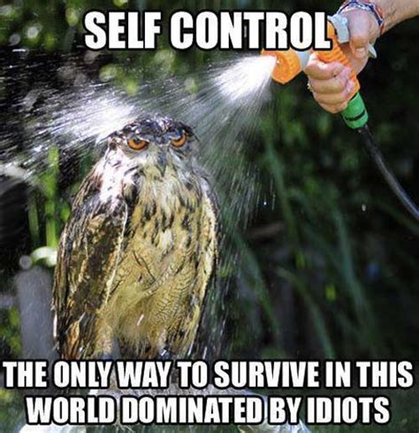 Funny Memes About Idiots - a difficult quality to master