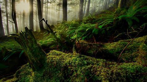 nature landscape trees forest moss plants wood