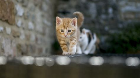 Animated Cat Wallpaper Free - cat screensavers and wallpaper 67 images