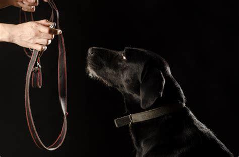 Mein schwarzer Hund oder Depressionen verstehen › Dr