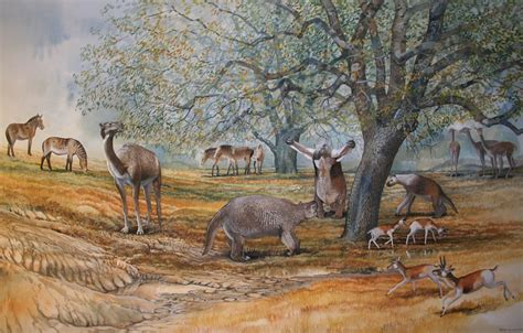 prehistoric megafauna camel western extinct north horse animals american sea mammals monsters fossils shasta