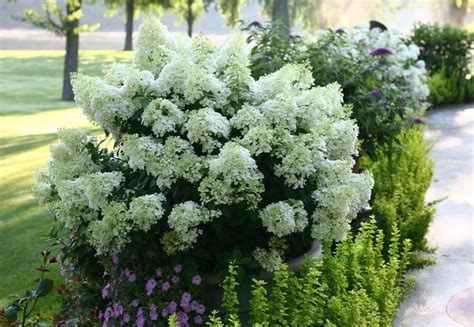 28 Best  Lasting Flowering Shrubs  1000 Images About